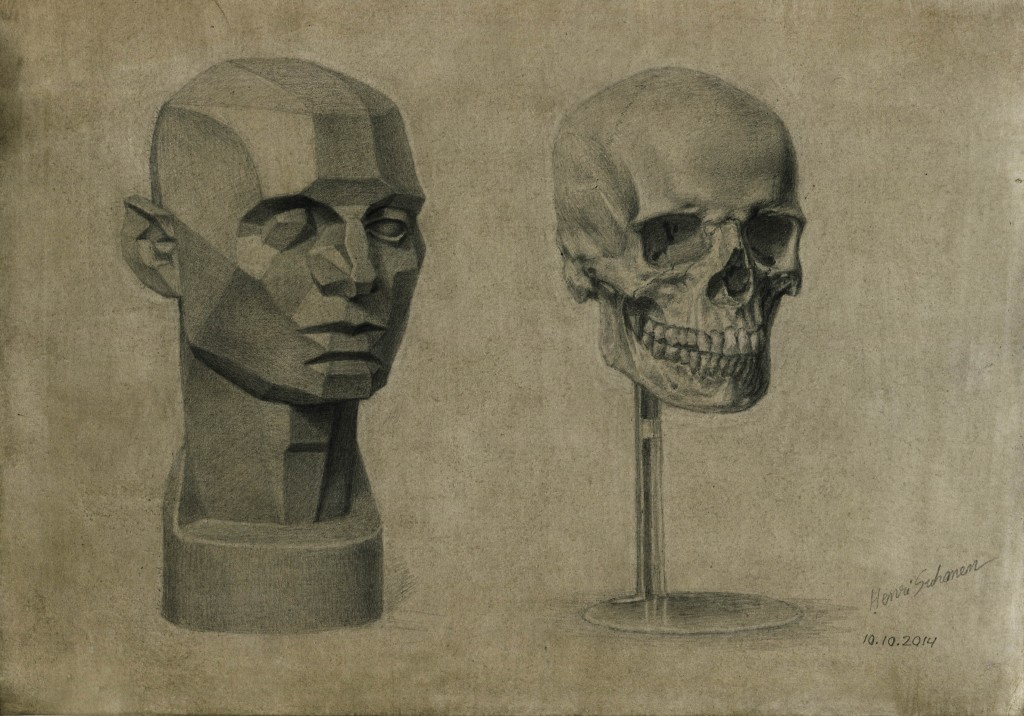 Planes of the Head and Skull replica study